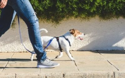 MÁSTER EN EDUCACIÓN ANIMAL: TÉCNICO EXPERTO EN ADIESTRAMIENTO CANINO